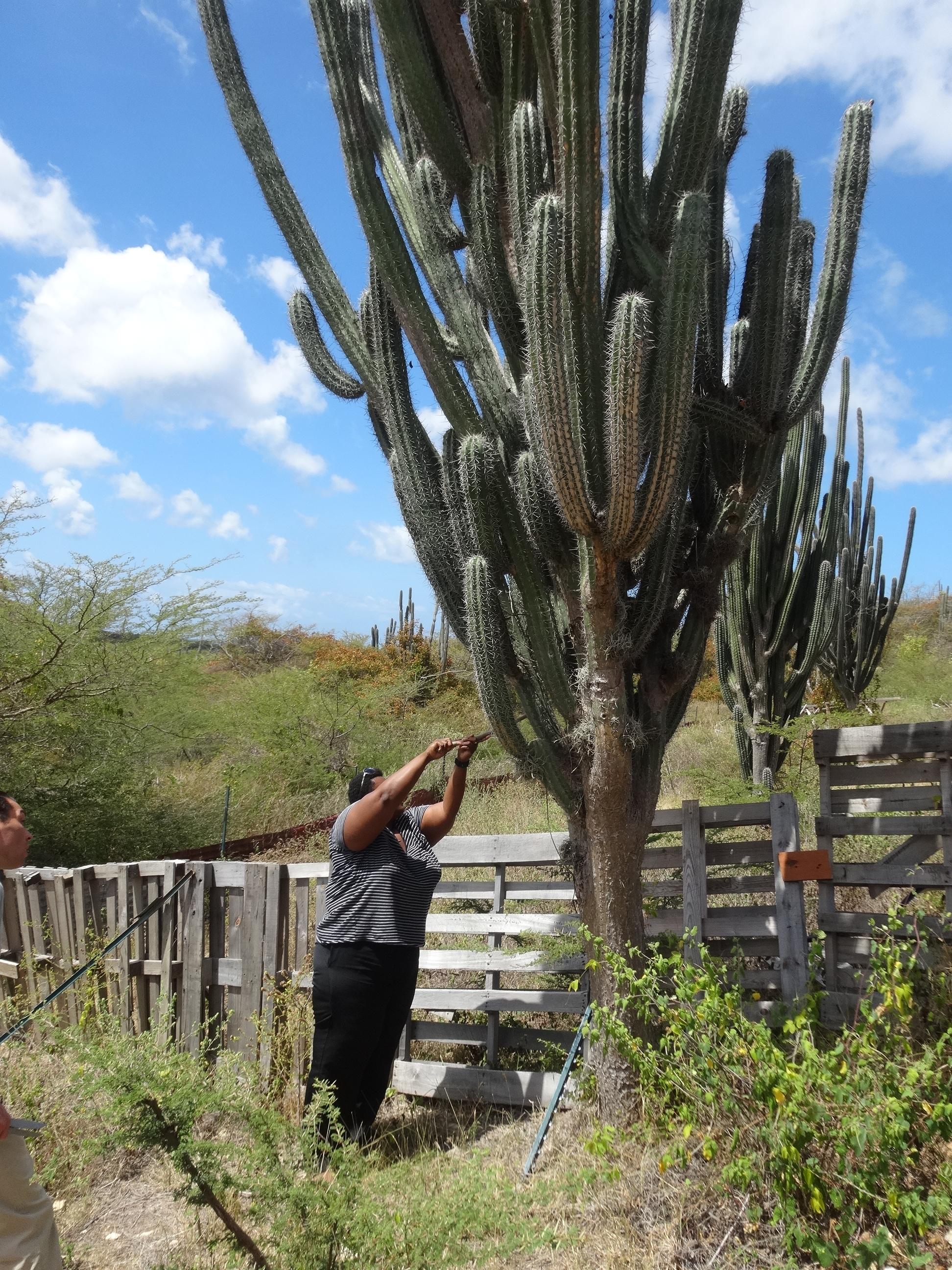 Curaçao | Kadushi (kaktus) soep